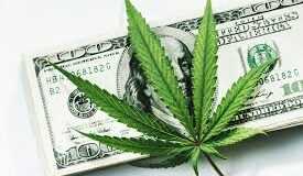 Cannabis MSO Green Thumb Industries raises $56 million in US share sale